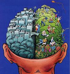 cerveau cloisonné
