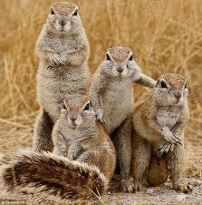 famille ecureuils