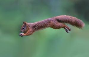 ecureuil confiant