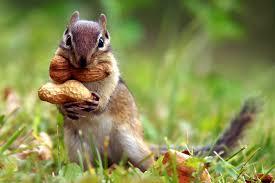ecureuil reserve
